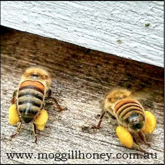 Moggill Honey